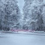 Fekete István: Téli berek – könyvajánló